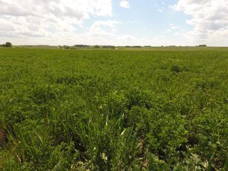 Photo 16: ON Range Road 12 in Rural Rocky View County: Rural Rocky View MD Commercial Land for sale : MLS®# A1116953