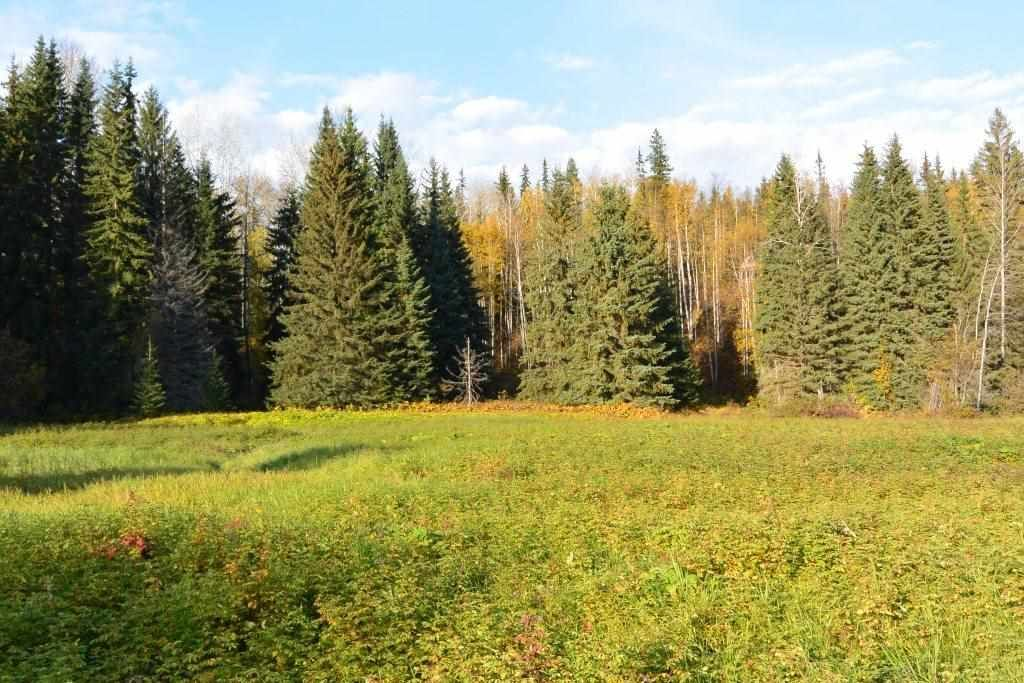 """Main Photo: 161 HELEN LAKE Road: Hazelton Land for sale in """"KISPIOX VALLEY"""" (Smithers And Area (Zone 54))  : MLS®# R2355392"""