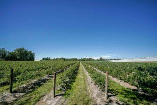 Photo 7: 27.28AC 4 Avenue in Langley: Land for sale : MLS®# R2362643