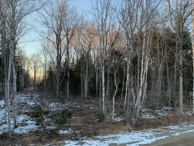 Main Photo: Lots Sissiboo Road in Bear River: 401-Digby County Vacant Land for sale (Annapolis Valley)  : MLS®# 202105338