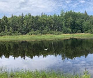 Photo 16: 5111 Little Harbour Road in Little Harbour: 108-Rural Pictou County Residential for sale (Northern Region)  : MLS®# 202102738