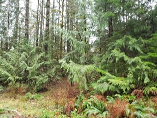 Photo 6: LOT 8 MACMILLAN Dr in : PA Sproat Lake Land for sale (Port Alberni)  : MLS®# 868768