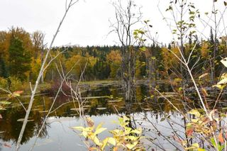 Photo 10: LOT A 37 Highway: Kitwanga Land for sale (Smithers And Area (Zone 54))  : MLS®# R2506362