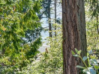 Photo 31: 304 GEORGIA Drive in Gibsons: Gibsons & Area House for sale (Sunshine Coast)  : MLS®# R2622245