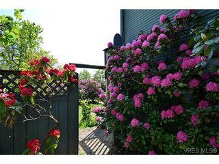 Photo 18: 623 Manchester Rd in VICTORIA: Vi Burnside House for sale (Victoria)  : MLS®# 629973