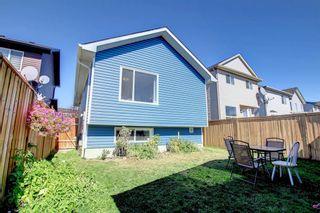 Photo 37: 67 Tarington Place NE in Calgary: Taradale Detached for sale : MLS®# A1146117