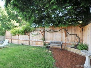 Photo 19: 3929 Braefoot Rd in VICTORIA: SE Cedar Hill House for sale (Saanich East)  : MLS®# 646556