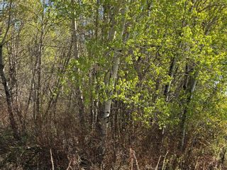Photo 2: 3 Snow Goose Drive: Lake Manitoba Narrows Residential for sale (R19)  : MLS®# 1916196
