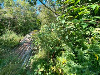 Photo 14: 11.6 acres East Tracadie Road in East Tracadie: 301-Antigonish Vacant Land for sale (Highland Region)  : MLS®# 202122282