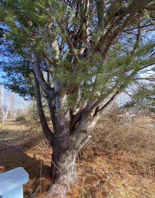 Photo 17: 45916 Cabot Trail in Indian Brook: 209-Victoria County / Baddeck Residential for sale (Cape Breton)  : MLS®# 202102070
