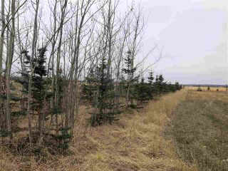 Photo 3: TWP RD 583 Range Rd 271: Rural Westlock County Rural Land/Vacant Lot for sale : MLS®# E4218433