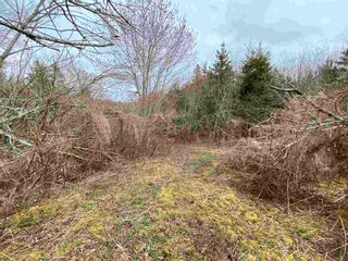 Photo 15: Sherbrooke Road in Greenvale: 108-Rural Pictou County Vacant Land for sale (Northern Region)  : MLS®# 202111683