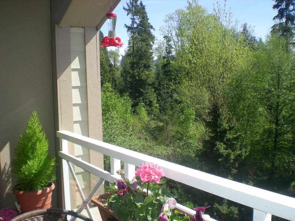 """Photo 17: Photos: 433 3600 WINDCREST Drive in North Vancouver: Roche Point Condo for sale in """"RAVENWOODS"""" : MLS®# R2072871"""