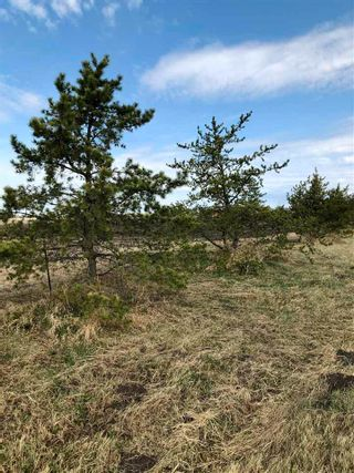 Photo 14: RR 255 & HWY 37: Rural Sturgeon County Rural Land/Vacant Lot for sale : MLS®# E4244134