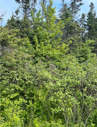 Photo 2: Lot 20 Ketch Harbour Road in Ketch Harbour: 9-Harrietsfield, Sambr And Halibut Bay Vacant Land for sale (Halifax-Dartmouth)  : MLS®# 202116566