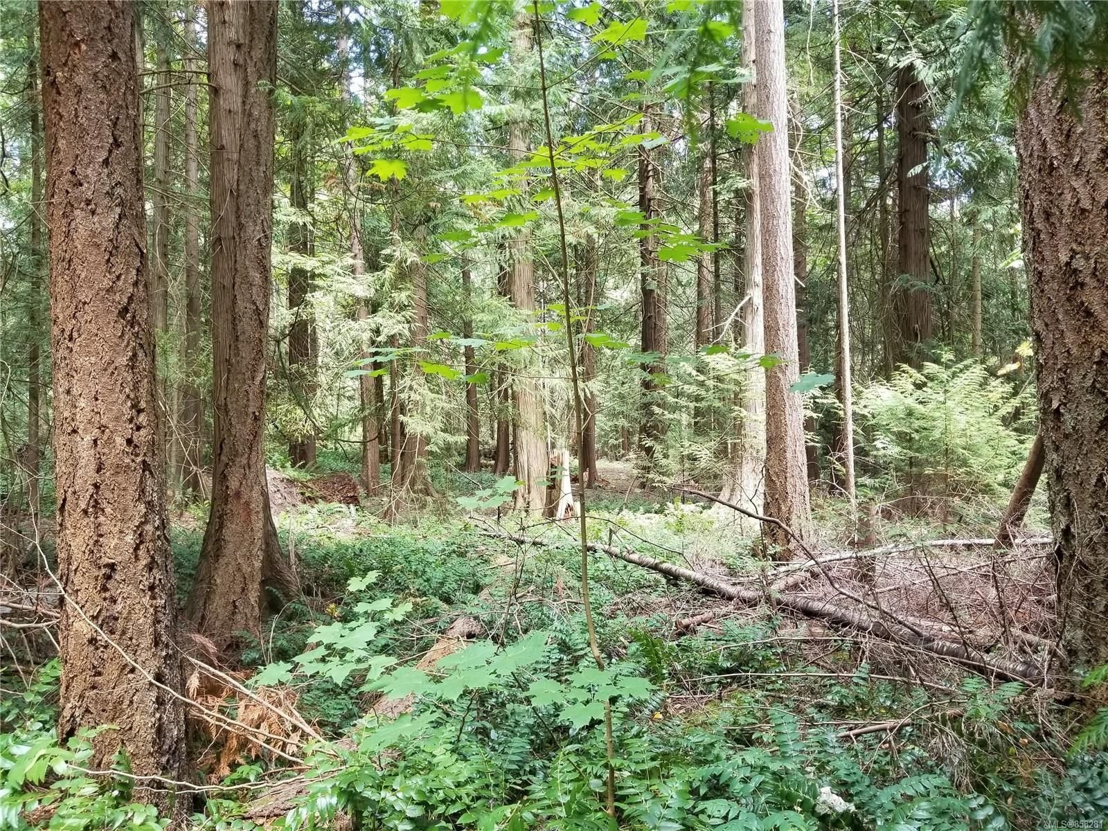 Main Photo: Lot 2 Bradley Dyne Rd in North Saanich: NS Ardmore Land for sale : MLS®# 858281