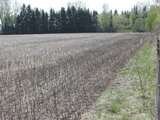 Photo 5: N/A: Olds Land for sale : MLS®# C4185110