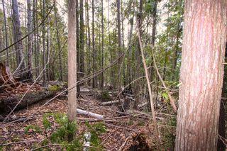 Photo 14: Lot 41 Klondike Trail: Anglemont Vacant Land for sale (North Shuswap)  : MLS®# 10228883
