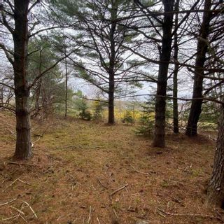 Photo 21: Vacant Land Highway 331 in West Lahave: 405-Lunenburg County Vacant Land for sale (South Shore)  : MLS®# 202111160
