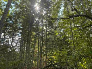 Photo 6: Lot Manse Road in Kenzieville: 108-Rural Pictou County Vacant Land for sale (Northern Region)  : MLS®# 202122852