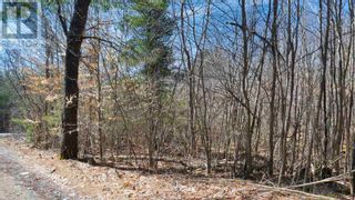 Photo 7: Acreage Labelle Road in Molega: Vacant Land for sale : MLS®# 202108257