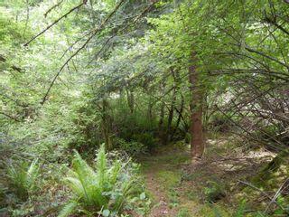 Photo 7: 1090 Fulford-Ganges Rd in : GI Salt Spring Land for sale (Gulf Islands)  : MLS®# 877270