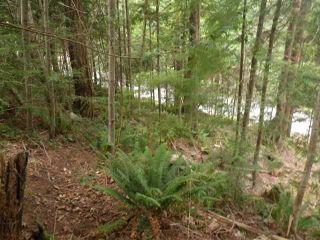 "Photo 3: 7488 SECHELT INLET Road in Sechelt: Sechelt District Land for sale in ""Tuwanek"" (Sunshine Coast)  : MLS®# V937854"