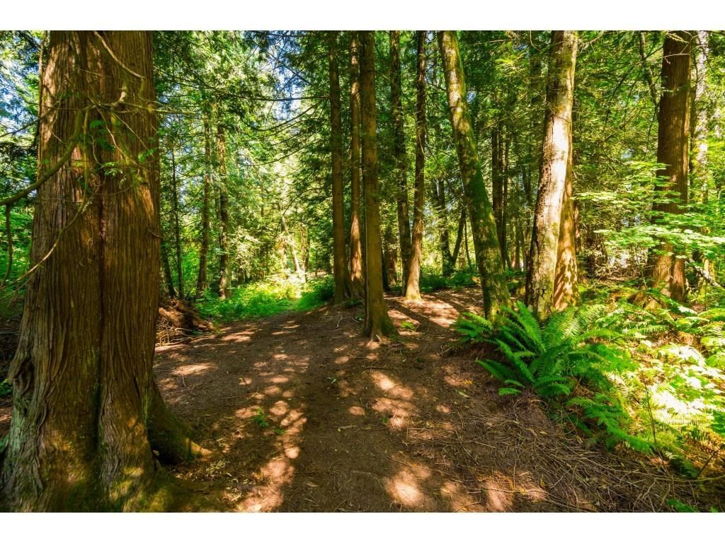 Photo 39: Photos: 26019 58 Avenue in Langley: County Line Glen Valley House for sale : MLS®# R2599684