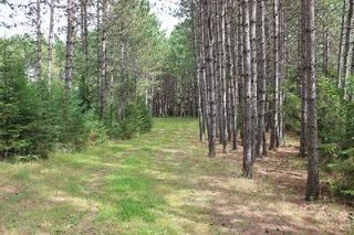 Photo 19: Lt 2 Hwy 121 in Kawartha Lakes: Rural Somerville Property for sale : MLS®# X2986227
