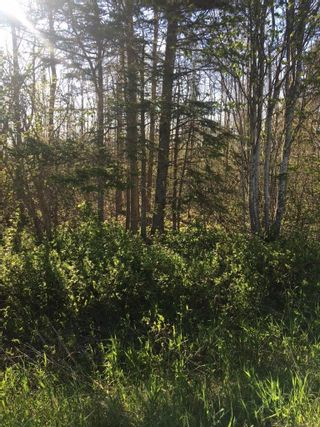 Photo 3: Lot 11-2 Douglas Road in Alma: 108-Rural Pictou County Vacant Land for sale (Northern Region)  : MLS®# 202113696