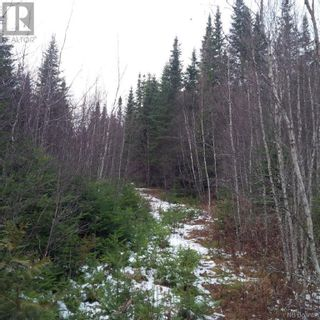 Photo 7: - Yourette Road in Dewolfe: Vacant Land for sale : MLS®# NB062662