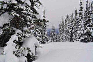"""Photo 7: 217 PRAIRIE Road in Smithers: Smithers - Rural Land for sale in """"Hudson Bay Mountain Resort"""" (Smithers And Area (Zone 54))  : MLS®# R2545464"""