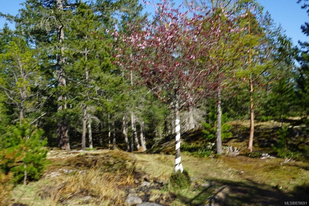 Photo 53: Photos: 979 Thunder Rd in : Isl Cortes Island House for sale (Islands)  : MLS®# 878691
