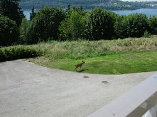 """Photo 19: 317 3629 DEERCREST Drive in North Vancouver: Roche Point Condo for sale in """"DEERFIELD BY THE SEA"""" : MLS®# V1118093"""