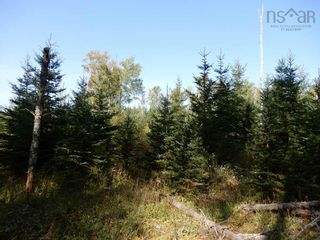 Photo 3: Tanner Hill Road in Limerock: 108-Rural Pictou County Vacant Land for sale (Northern Region)  : MLS®# 202121301