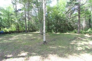 Photo 6: 300 Pinery Road in Kawartha Lakes: Rural Somerville Property for sale : MLS®# X4840235