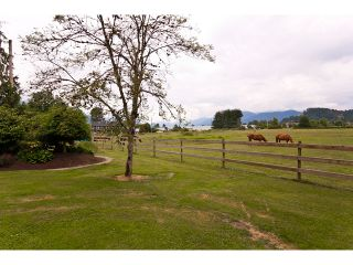 Photo 34: 15146 HARRIS Road in Pitt Meadows: North Meadows House for sale : MLS®# V899524