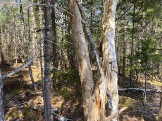 Photo 12: 65 Eaglet Lane in Musquodoboit Harbour: 35-Halifax County East Vacant Land for sale (Halifax-Dartmouth)  : MLS®# 202109854