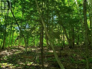 Photo 18: 8801 SEVERN RIVER in Orillia: Vacant Land for sale : MLS®# 40120545