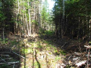 Photo 7: 236 Highway Highway in Kennetcook: 105-East Hants/Colchester West Vacant Land for sale (Halifax-Dartmouth)  : MLS®# 202116831