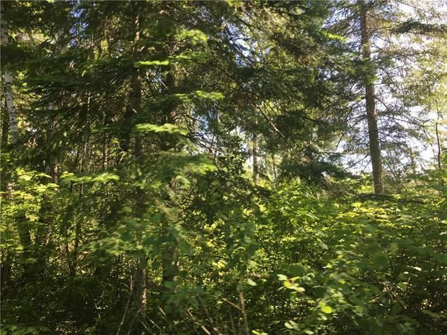 Fully treed lot at the end of the development on a no thru road. Very private.