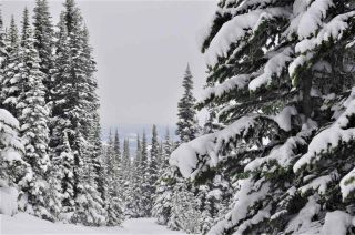 """Photo 10: 217 PRAIRIE Road in Smithers: Smithers - Rural Land for sale in """"Hudson Bay Mountain Resort"""" (Smithers And Area (Zone 54))  : MLS®# R2545464"""