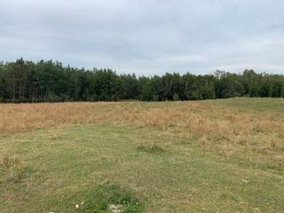 Photo 5: RR 275 Twp 482: Rural Leduc County Rural Land/Vacant Lot for sale : MLS®# E4261137