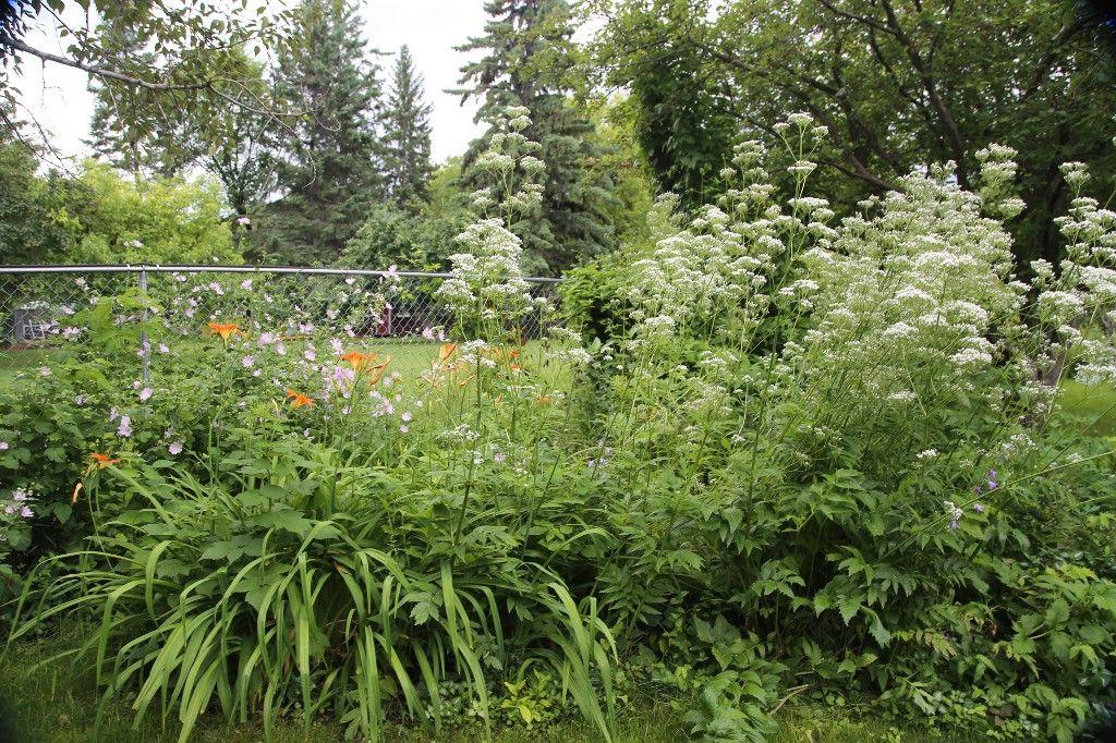 Photo 41: Photos: 154 Douglas Park Road in Winnipeg: Bruce Park/ St. James Single Family Detached for sale (West Winnipeg)  : MLS®# 1519811