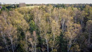 Photo 4: JP-1 Old Baxter Mill Road in Baxters Harbour: 404-Kings County Vacant Land for sale (Annapolis Valley)  : MLS®# 202021658