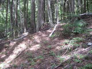Photo 9: Lot 23 Vickers Trail in Anglemont: Land Only for sale : MLS®# 10011652