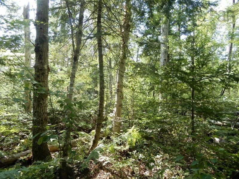 Main Photo: Watt Road in Hedgeville: 108-Rural Pictou County Vacant Land for sale (Northern Region)  : MLS®# 202122216