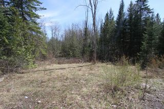 Photo 5: 259 County Rd 41 Road in Kawartha Lakes: Rural Bexley Property for sale : MLS®# X5210398