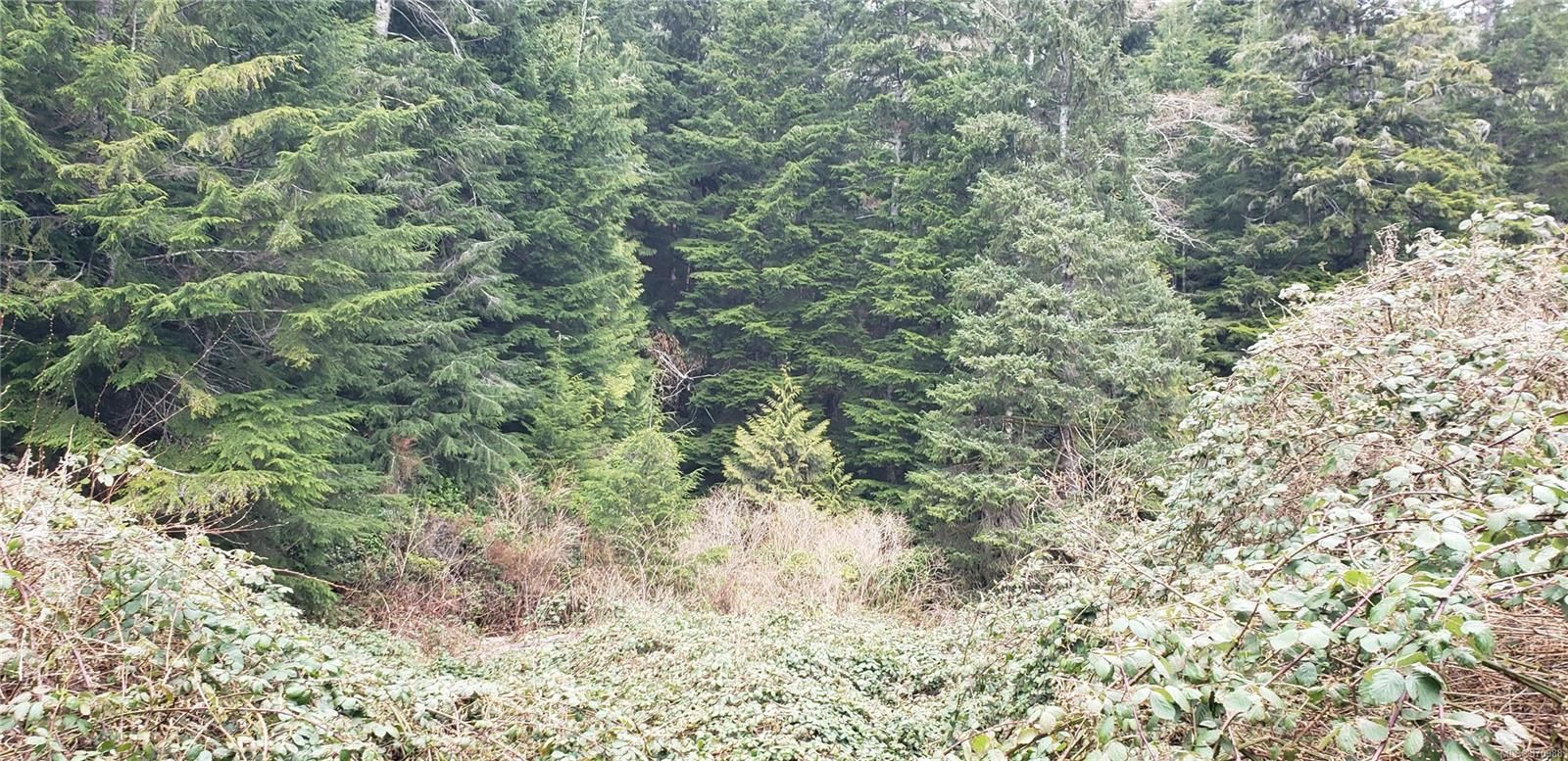 Main Photo: Lot 17 Haggard Cove in : PA Alberni Inlet Land for sale (Port Alberni)  : MLS®# 870988