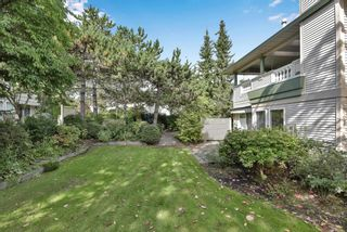 """Photo 30: 296 13888 70 Avenue in Surrey: East Newton Townhouse for sale in """"CHELSEA GARDENS"""" : MLS®# R2621747"""